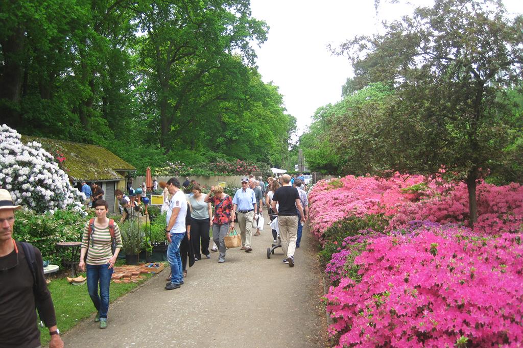 Der blühende Rhododrendronpark wird am 26. und 27. Mai zu einem Pflanzenmarkt. Seltene Pflanzen sind dort zu erwerben
