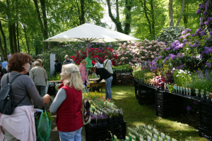 Pflanzenmarkt (c) Axel Oehler